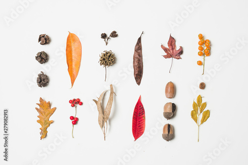 Fotomural  Variety of colorful autumn leaves
