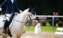 Dressage Horse During A Dressage Competition In The Exam..