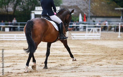 Foto op Canvas Paarden Dressage horse during a dressage competition in the exam..