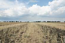 Gorgeous Rural Landscape.Sunny Day I The Field After Harvest