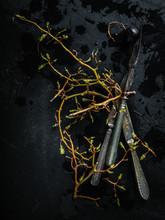 Grape Bunchstem Pedicel On Dark Background With Cutlery Illustration
