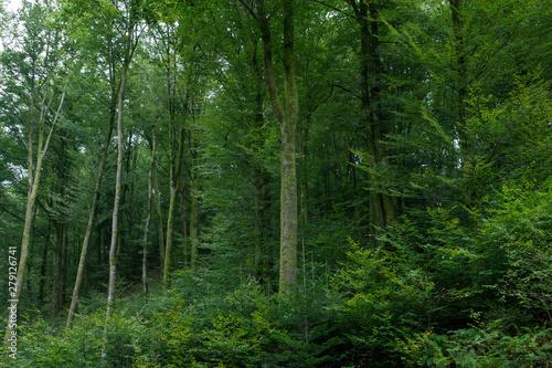 Fototapeten Wald Forest Vosges France