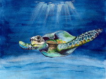 Watercolor Picture Of  A Sea  Turtle In Blue Water With Rays Of Light