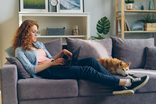 Young Woman Freelancer Is Working With Laptop Typing Sitting On Sofa At Home With Cute Dog Lying Near Her. Distant Online Work, Animals And People Concept.