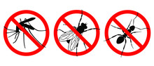 Warning Sign NO INSECTS. Prohibited Sign. Set Icons: NO MOSQUITOES; NO ANTS, NO FLIES. Symbol For Informational And Institutional Sanitation And Related Care