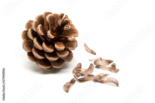 Obraz na plátně  Dry pine cone with seeds around it isolated on white background