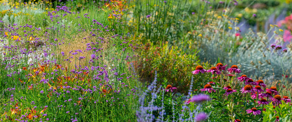 Panel Szklany Podświetlane Ogrody perennial garden flower close up in the garden