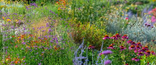 Obraz perennial garden flower close up in the garden - fototapety do salonu