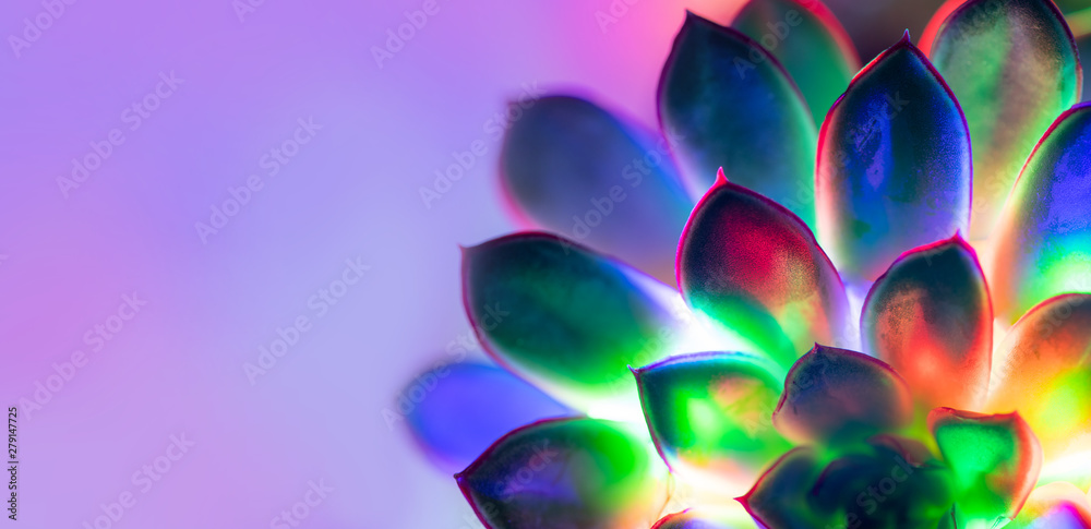 Fototapety, obrazy: Trendy neon background with succulent plant with copy space.