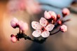 Extreme closeup macro photography of a beautiful pale pink cherry blossom on a branch of a tree