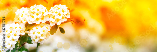 Spoed Fotobehang Kersenbloesem Abstract blurred website spring banner background of cherry blossoms tree with bokeh. Selective focus. Orange sunlight floral warm bunner.