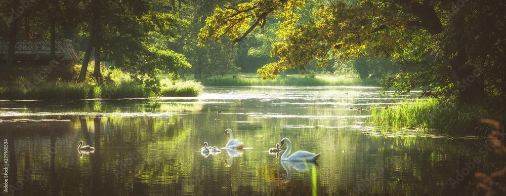 Fototapety, obrazy: beautiful summer morning