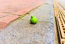 A Green Unripe Fig Laying Stre...