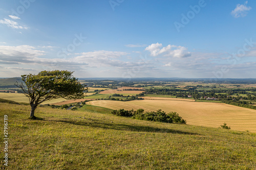 Fotografía  A full frame photograph of an agricultural field in summer