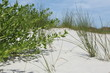 white sand dune of Florida beach in summer time
