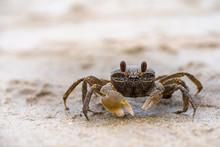 Small Sea Crab On Beach