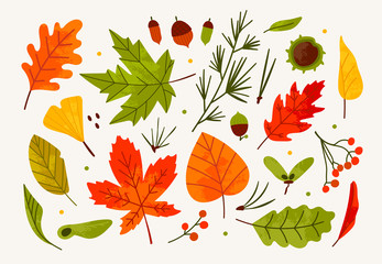 Hand drawn big vector set of various autumn leaves, rowan, acorn and chestnut. Colored trendy illustration. Flat design. Stamp texture. All elements are isolated