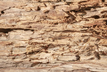 The Texture Of An Old Dried Log Broken Across