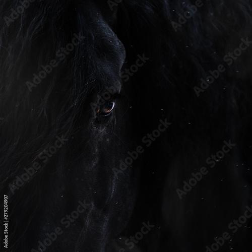 Eye of a black stallion Wall mural