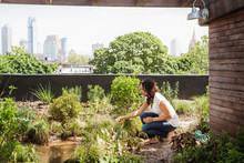 Woman Planting Plants In Garden