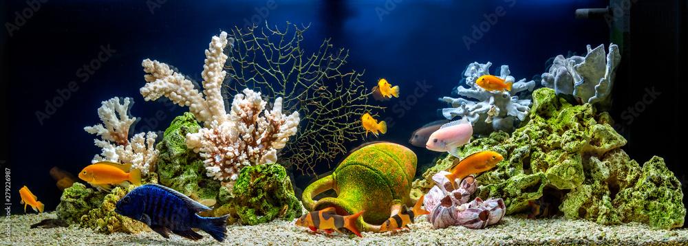 Fototapeta Freshwater aquarium decorated in pseudo-sea style. Aqua scape and aqua design.