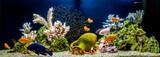 Freshwater aquarium decorated in pseudo-sea style. Aqua scape and aqua design.