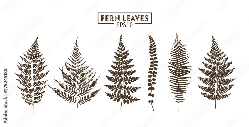 Fototapeta Set of fern leaves isolated on white background.