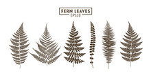 Set Of Fern Leaves Isolated On...