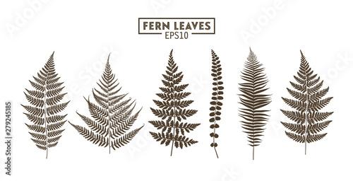 Carta da parati Set of fern leaves isolated on white background.