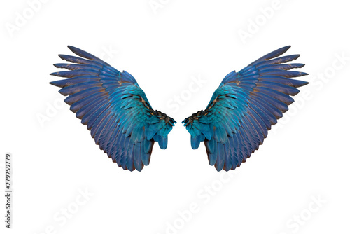 Foto The rear wings of the blue and gold macaw isolated on white background