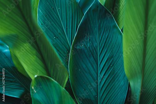 Cuadros en Lienzo  Dark Leaves background water drop Leaf surface