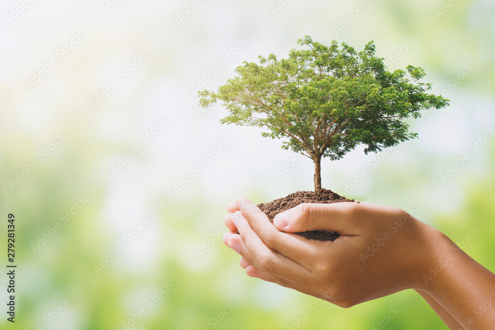 Fototapety, obrazy: hand holdig big tree growing on green background. eco earth day concept