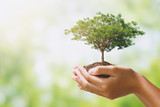 hand holdig big tree growing on green background. eco earth day concept