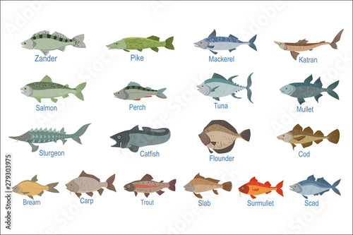 River Fish Identification Slate With Names Fototapeta