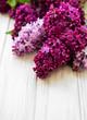 Lilac spring flower border