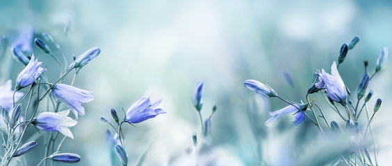 Lilac bellflowers on a blurred blue background