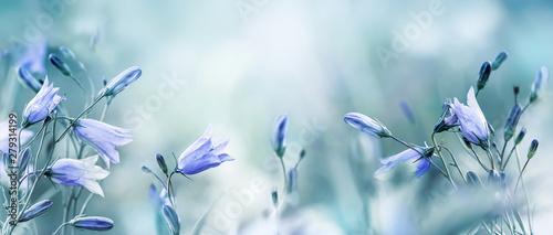 Fototapeta Lilac bellflowers on a blurred blue background obraz