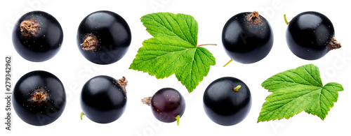 Black currant collection isolated on white background Wallpaper Mural