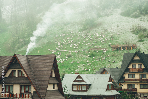Foto auf AluDibond Olivgrun A herd of grazing sheep on distance in the Zakopane mountain village on a cloudy day. Poland.