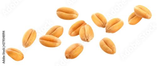 Fototapeta Wheat grains isolated on white background, close-up obraz