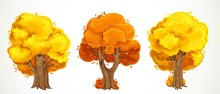 Set Of Old Big Thick Trees With Autumn Yellow And Orange Foliage Vector Drawing Isolated On White Background