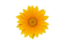 Big Yellow Flower Isolated On White Background