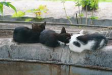 Three Cute Black And White Cat...