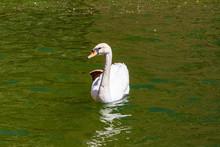 Swan Natural Space Of Sant Mig...