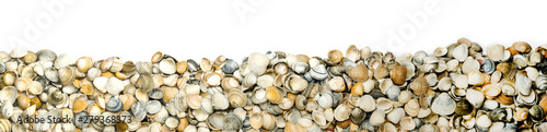Fotografía  a collection of seashells on white backgound for border or banner, panorama
