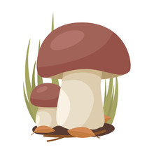 Two White Mushrooms Grow On A Background Of Grass