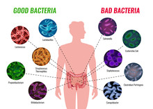 Good And Bad Bacteria Poster