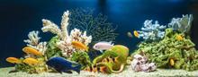 Freshwater Aquarium In Pseudo-sea Style. Aqua Scape And Aqua Design.