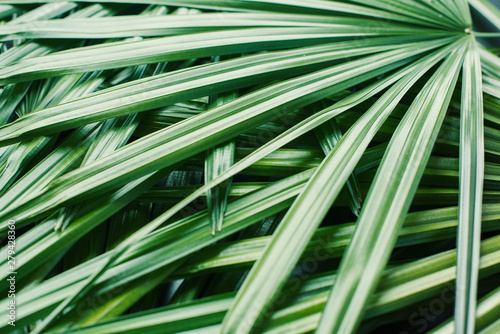 Fotomural  natural pattern from tropical plant palm leaves