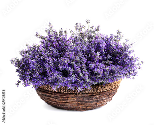 Fresh lavender flowers in basket on white background Canvas Print